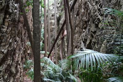 Пальмовое ущелье - 2 Австралия