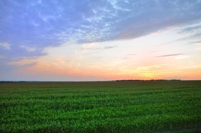 Поле..... Русское поле.... красота Россия поле закат Русский