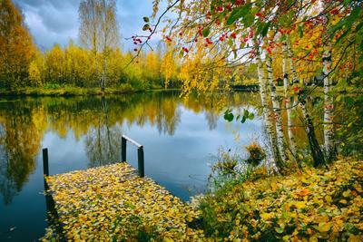 Осенний поцелуй осень золотая октябрь