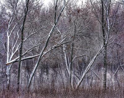 Середина зимы Зима вид из окна деревья в снегу зимнее настроение