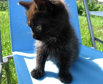 найдёныш котенок