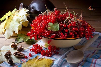 Осень наступила, высохли цветы...но поспела К-Алина))) калина осень листья