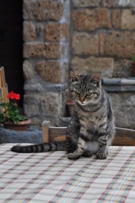 взгляд кот стол взгляд
