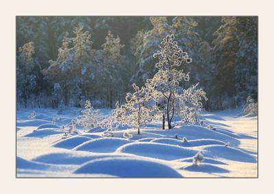 зимние формы
