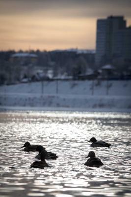 В ожидании тепла Иркутск Ангара Зима в Иркутске