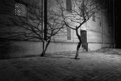 *** Узбекистан Бухара ночь дерево тень