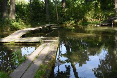 Голубовский родник природа вода лес