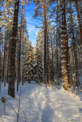 Объятие зимы