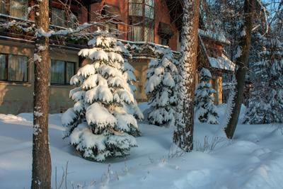 ***ёлочка у гостиницы С кандинавия зима парк
