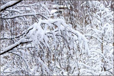 1 января уходящего года! зима снег январь 1-е
