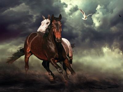 Impetus Digital Photo Art Horses Eltons Fantasies