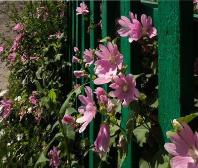Любопытные цветы