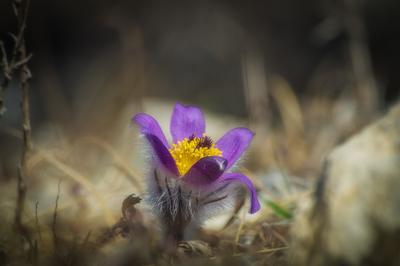 Пробуждение цветы макро природа