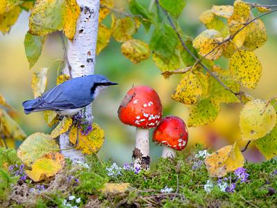 Осенняя зарисовка природа птицы фотоохота поползень осень грибы