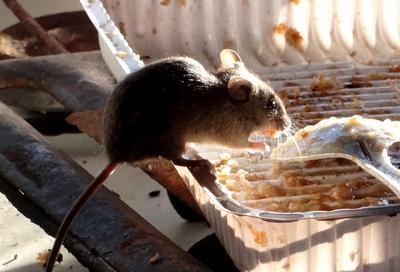Обжраловка 2 Мышь