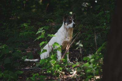 *** Природа лес собаки