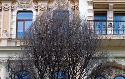 У домов есть глаза дом окна голубые глаза дерево ветки волосы прическа взгляд