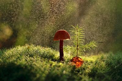 Дождь грибы