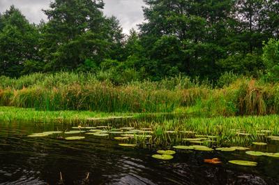 Вечер на озере Старая речка