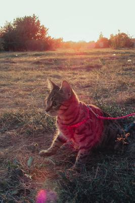 маленькая Боми кот котик кошка животные портрет кота