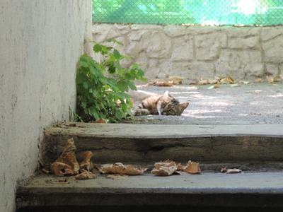Летний отдых  кошки Кошка коты дворик лето