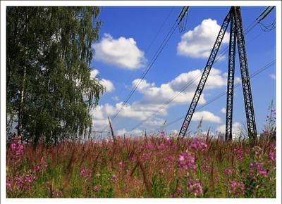 * * * поле, цветы, опора, дерево, береза, поляна, провода, небо, облака, трава, электропередач, линия, жара, Митино, Москва