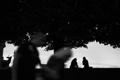 Под сенью деревьев