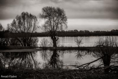 Разлив 2 Весна Апрель Река Ока Разлив Муром День Дождь Пасмурно Отражения Деревья Облака