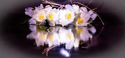 Отражение Цветы зеркало Отражение