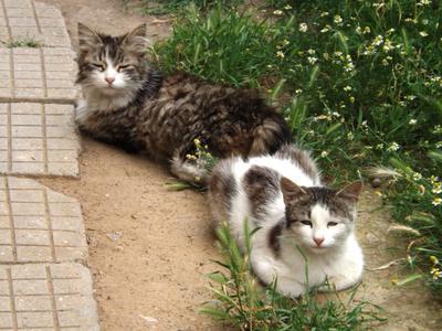 Кошки животные