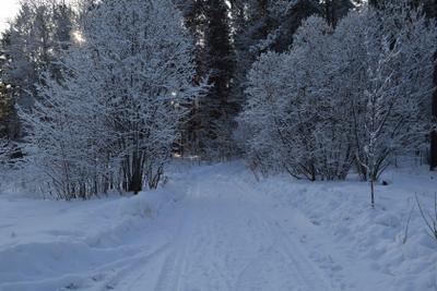Дорога в зиму. лес природа зима снег