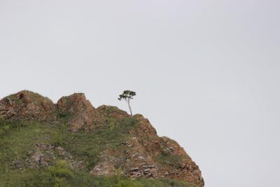 Дерево на реке Базаиха
