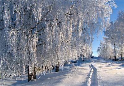 Зимняя тропинка зима декабрь снег иней Ухта Коми