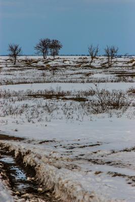 зимнее поле поле зима снег