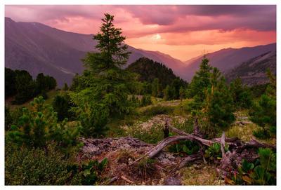 Горная симфония Алтай закат горы