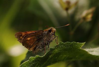 Солнечным днём на листочке лето трава бабочка