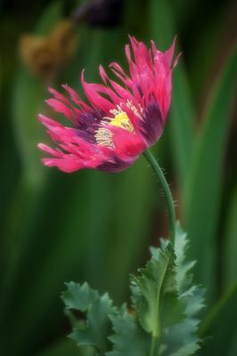 *** цветы природа