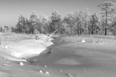 снежный этюд зима зимой тропы звериные река снег деревья Сибирь стужа