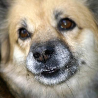 Чеширский пёс. Улыбка :-) собака