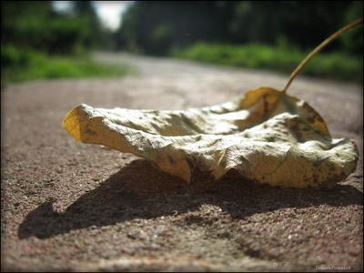 Надежда умирает последней.. макро лист солнце тень