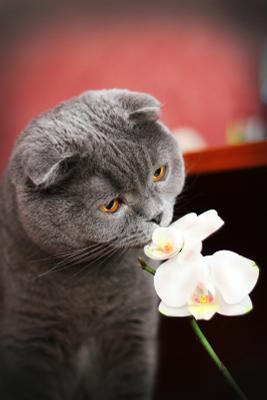Эстет кот, Мишка, орхидея