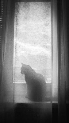 Марта Кошка окно свет шторы