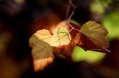 Осень Осень листья макро свет коричневый