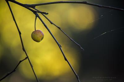 autumn dayzz