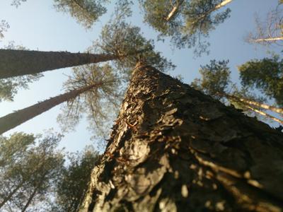 Уходящее вверх дерево