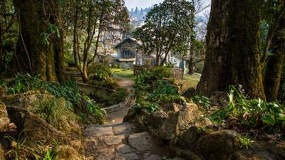 Один замечательный день. Индия Дарджилинг Darjeeling lloyd botanical garden