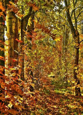 Золото осени осень аллея золотая