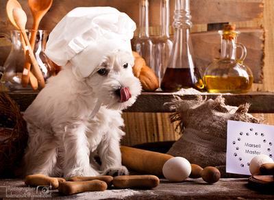 Пекарь. цвергшнауцер