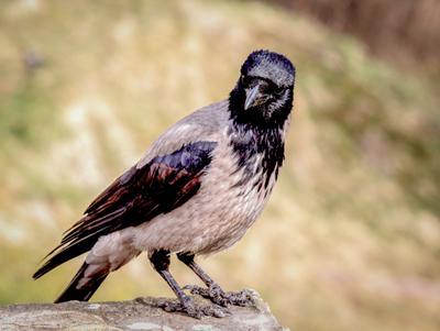 Вы кто такая, чтоб я вам еще и улыбалась?:) Ворона птицы в городе