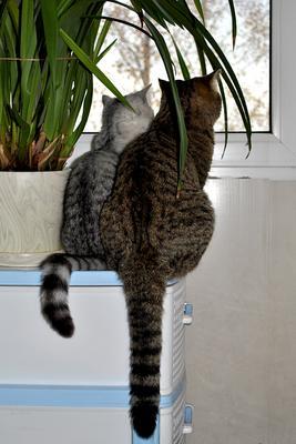 У окна кошки